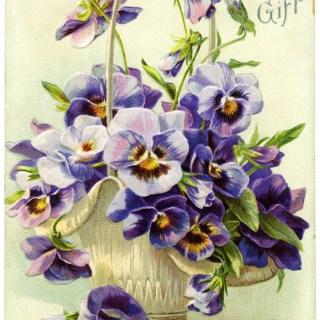 Basket of Purple Pansies Postcard