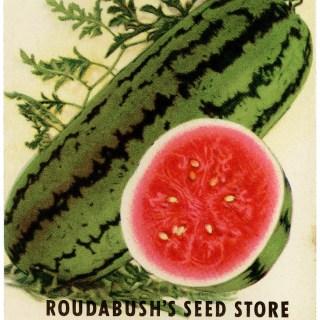 Vintage Watermelon Seed Packet