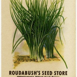Vintage Seed Packet: Chives