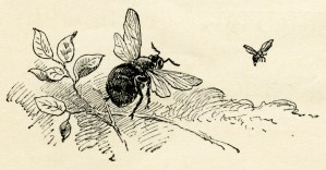 wasp and bee, sketch of insects, old story image