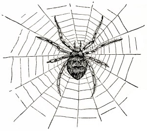 vintage spider clip art, black and white graphics, vintage halloween clipart, spider spiderweb illustration, creepy insect engraving