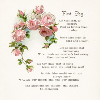 First Day Poem with Cluster of Pink Roses