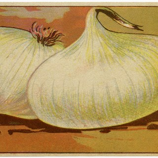 Free Vintage Image ~ White Onion French Seed Label