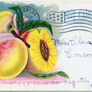Free Vintage Image ~ Archias' Seed Store Peaches Postcard