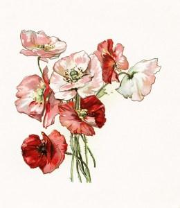 free vintage floral image, flower clipart, poppies illustration, printable flower, bryant poetry