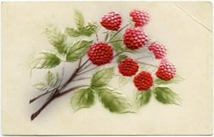 vintage postcard, raspberries clipart, vintage fruit postcard, antique berry illustration, free digital graphics
