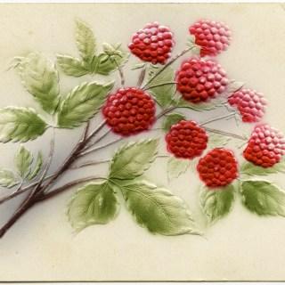 Free Vintage Image ~ Raspberries Postcard
