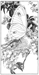 vintage clipart butterfly, printable fairy graphics, digital fairy image, free black and white clip art, antique angel butterfly illustration