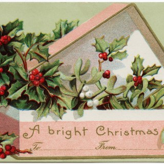 Holly and Berries in Pink Box ~ Free Graphic