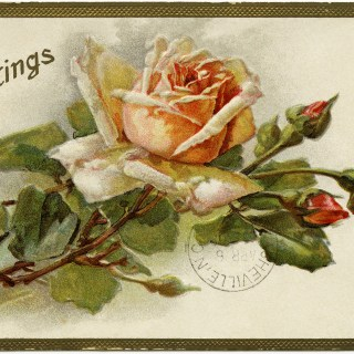 Shabby Yellow Rose Greetings Postcard