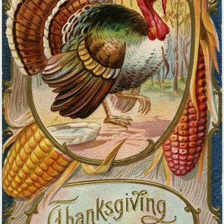 Thanksgiving Greeting Turkey Postcard