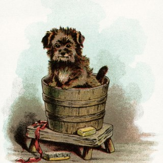 Puppy in Wooden Tub ~ Free Vintage Image