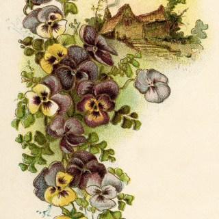 Cluster of Pansies ~ Free Vintage Image