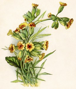 yellow flower illustration, gems from holmes, vintage flower clipart, antique floral clip art, free vintage image