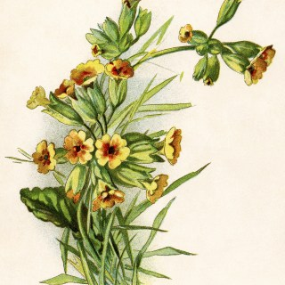 Pretty Yellow Flowers ~ Free Vintage Image