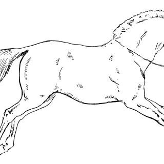 Vintage Circus Horse ~ Free Clip Art