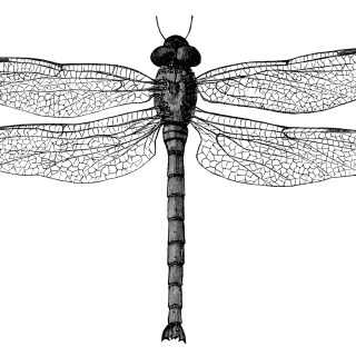 Vintage Dragonfly ~ Free Clip Art