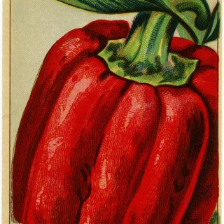 Red Bell Pepper French Seed Packet Label ~ Free Vintage Image