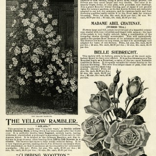 Vintage Roses Garden Catalogue Page and Clip Art ~ Free Graphics