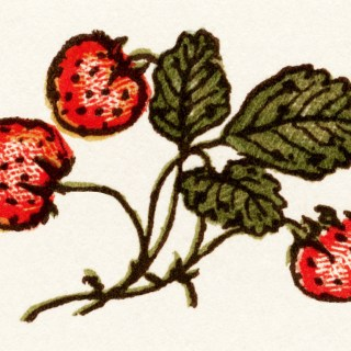 Kate Greenaway Strawberries ~ Free Vintage Image
