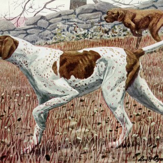 Pointer Dogs ~ Free Vintage Illustration