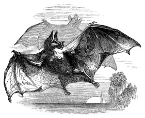 vintage halloween clip art, vampire bat clipart, black and white graphics, old book clipping, flying bat illustration
