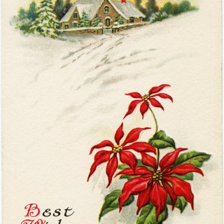 Poinsettia Christmas Postcard ~ Free Vintage Image