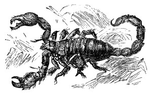 vintage scorpion clip art, black and white graphics, vintage halloween clipart, scorpion illustration, creepy insect engraving