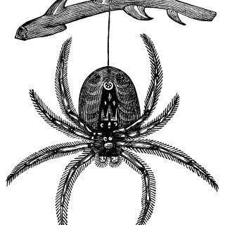 Hanging Spider ~ Free Vintage Clip Art