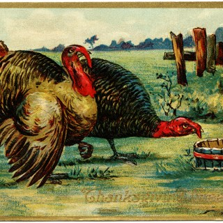 Thanksgiving Turkeys ~ Free Vintage Graphic