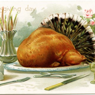 Thanksgiving Day Turkey Postcard