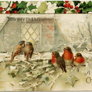 Birds and Holly Vintage Christmas Postcard