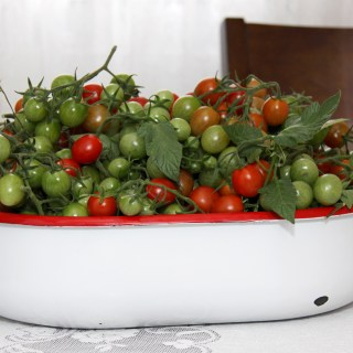 Tomato Harvest and Recipe Request