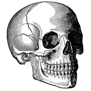 Head Skull Clip Art