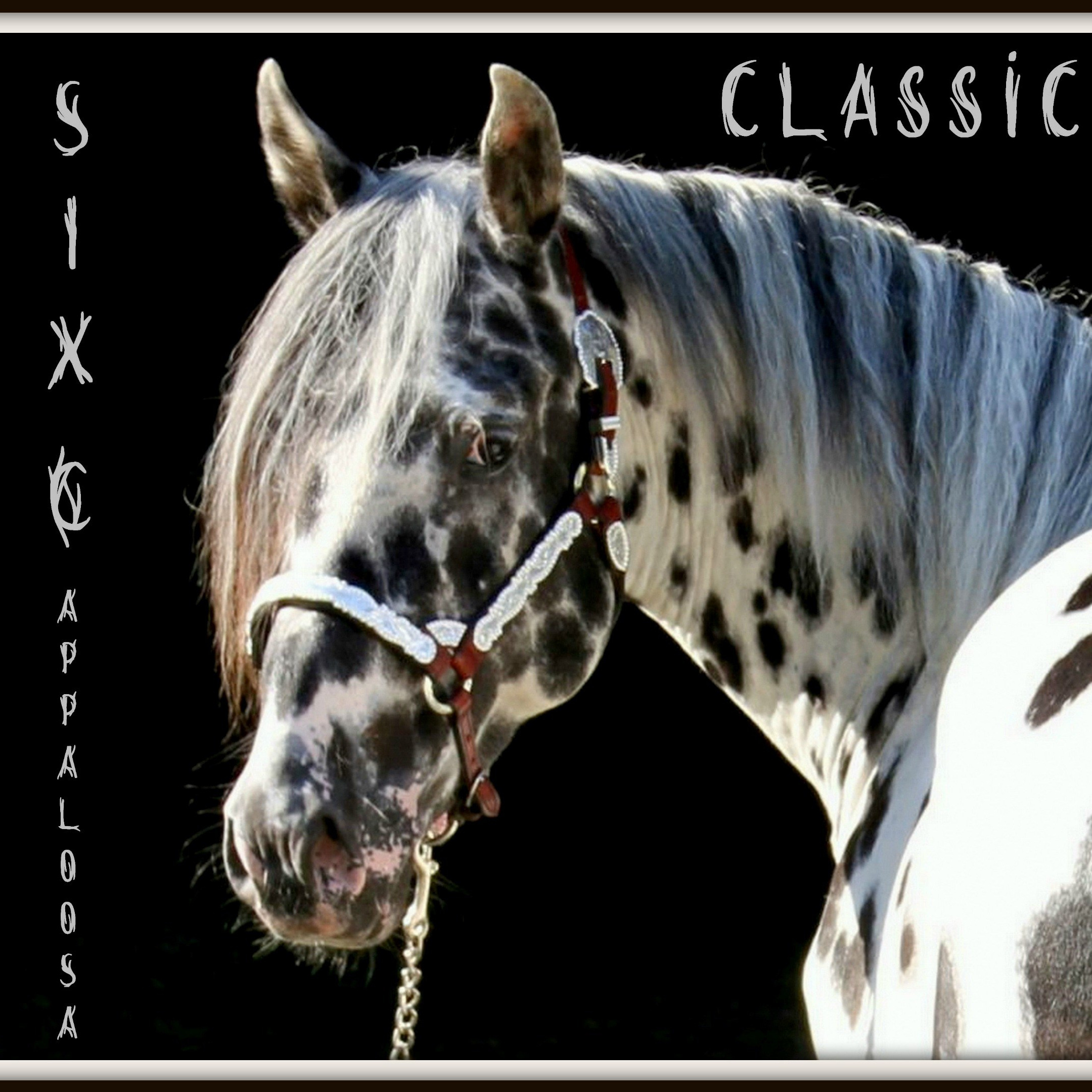 All About Appaloosa By Six C Appaloosa