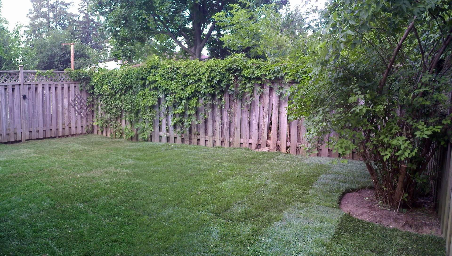 Backyard Clean Up Work Backyard Cleanup Old South Landscape Professionals