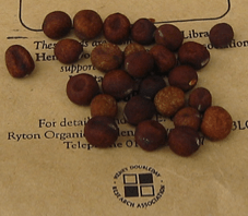 Heritage Seed Library Carlin Seeds