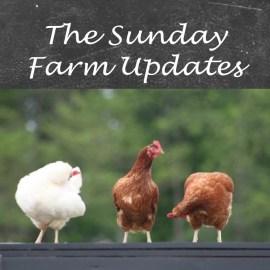 Sunday Farm main