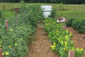 Good Compost =  Good Soil = Healthy Plants