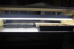 A couple of inexpensive double shop lights -and we can raise 4 whole flats of seedlings.