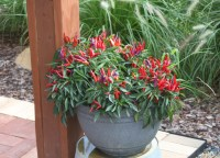 Keeping Potted Plants and Hanging Baskets Beautiful All ...