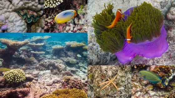 Just some of the colourful marine life you can see.
