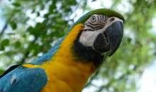 Ένας παπαγάλος σε ρόλο Ηρακλή Πουαρό – Βοήθησε στην εξιχνίαση δολοφονίας