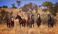 Ποιο είναι το πιο επικίνδυνο ζώο της Αυστραλίας;