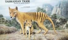 Τι συμβαίνει με την (εξαφανισμένη) τίγρη της Τασμανίας;
