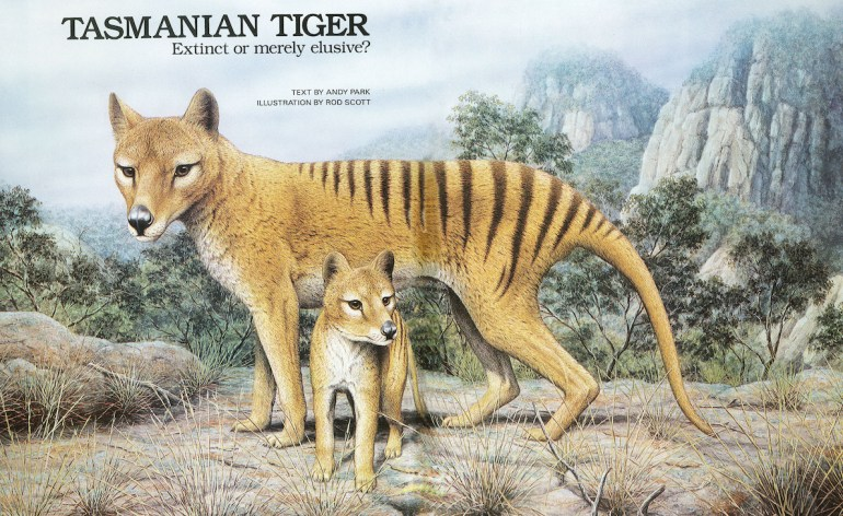 Article about Jeremy Griffith's Tasmanian Tiger search in Austra
