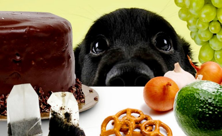 Dangerous-food-for-dogs