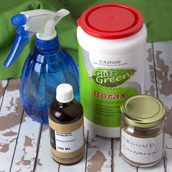 Natural Pest Control for Ants | Om Nom Ally