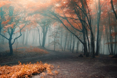 Misty Autumn Forest