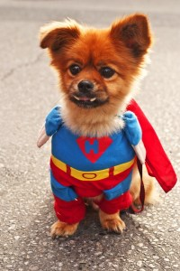 Cute Dog Costumes for Halloween